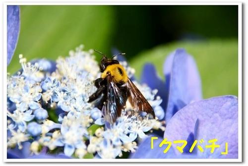 10.JPG_8416.jpg
