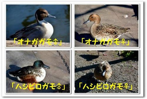 14.JPG_1209.jpg