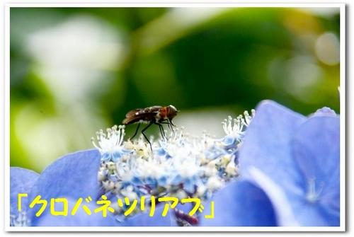 5.JPG_8396.jpg
