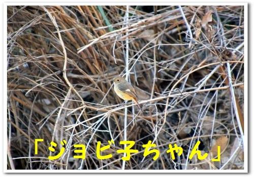 9.DSC_0451.jpg