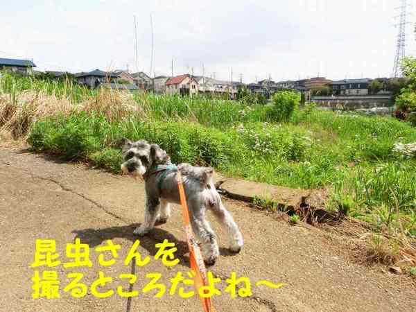 CIMG5674.jpg