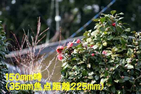 DSC_1077(150mm・35mm換算225mm)-a.jpg