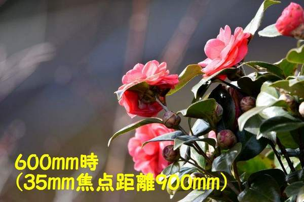 DSC_1078(600mm・35mm換算900mm)-b.jpg