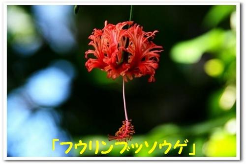 JPG_0435.jpg