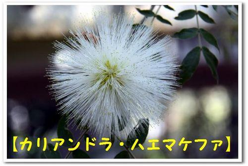 JPG_5302.jpg