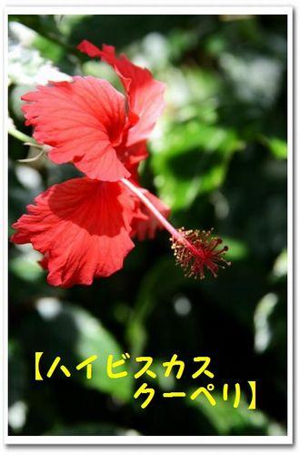 JPG_5325.jpg