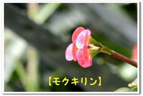 JPG_5365.jpg