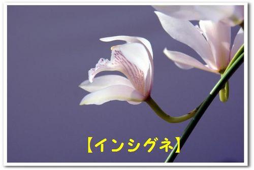 JPG_5405.jpg