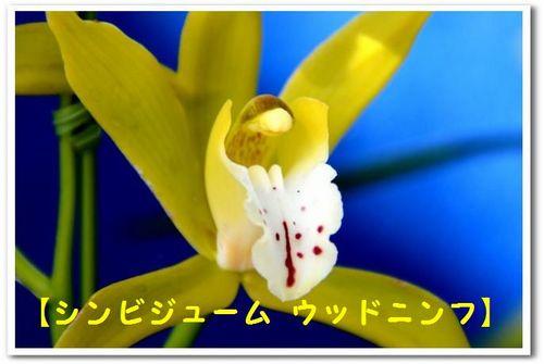JPG_5408.jpg